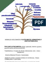 Platelmintos y Pseudocelomados