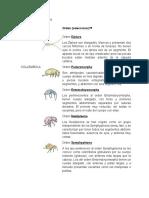 Ordenes de los insectos