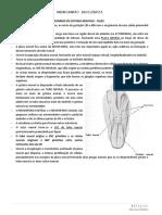 Neuroanatomia - Mariana Mitiko