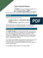 Búfalo Características