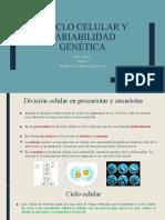 2- 5. Ciclo celular y variabilidad genética