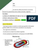 Guía de Ciencias Naturales Rodrigo tipos de cèlula
