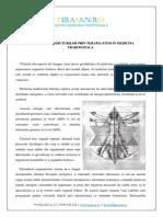 Regenerarea tesuturilor prin terapia stem in medicina traditionala