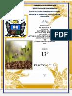 EXTRACCIÓN DE ADN EN VEGETALES    PRACTICA 13