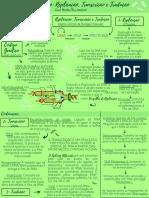 Mapa Mental - REPLICAÇÃO, TRADUÇÃO E TRANSCRIÇÃO.