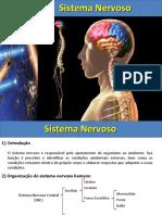 Aula 2  Sistema Nervoso anato aplicada