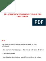 TP1 Idenfca Phénotypique BT2