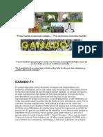 GANADO_F1_DOBLE_PROPOSITO.