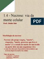 1.4 - Necrose