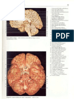 Rochen J.W. Yokochi C. - Anatomia człowieka. Atlas fotograficzny 03 - Głowa