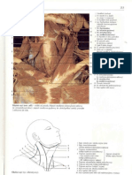 Atlas Anatomiczny Pdf