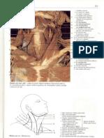 Rochen J.W. Yokochi C. - Anatomia człowieka. Atlas fotograficzny 05 - Szyja