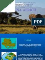 Fauna Africii