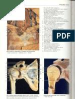 Rochen J.W. Yokochi C. - Anatomia człowieka. Atlas fotograficzny 10 - Kończyna górna