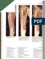 Rochen J.W. Yokochi C. - Anatomia człowieka. Atlas fotograficzny 11 - Kończyna dolna