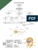Bases Neurológicas de la Conducta