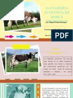 Caracteristicas del ganado bovino