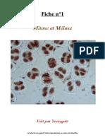 BDR - FICHE - Cours 1 Mitose et Méiose (2)