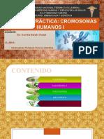Practica 2 Embriologia