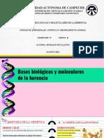 BASES BIOLÓGICAS - AVRIL
