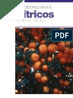 Descriptores_para_los_citricos__Citrus_539 (1)