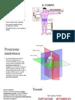 Anatomia_completo