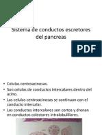 Sistema de conductos escretores del pancreas