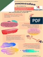 Infografia Musculos