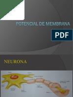 Potencial de Mebrana 6 (1)