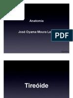 3o período 2011-1 - Anatomia Tireoide, Paratireoide e Adrenal