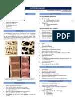 Ortopedia - 13 - Osteoporose