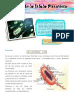 celula procariota y eucariota 4° año