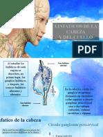 Linfaticos de la cabeza y del cuello (1)