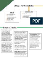control fitosanitario de cultivo