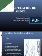 Tema 3. DNA recombinante y manipulación de genes