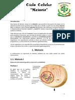 Meiosis 3C