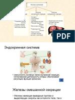 Эндокринная система (1)