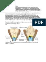 Desarrollo de La Troquea, Bronquios y Pulmones