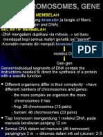 AFF1_DNA-struktur dan fungsi-2009