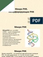 Микро РНК (реферат)
