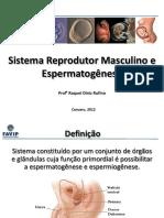 1-Sistema Reprodutor Masculino e espermatogênese (1)