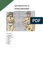 Guia Prac 12 Endocrino