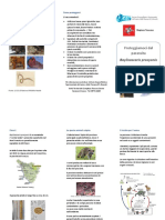 Proteggiamoci-dal-parassita-Baylisascaris-procyonis1