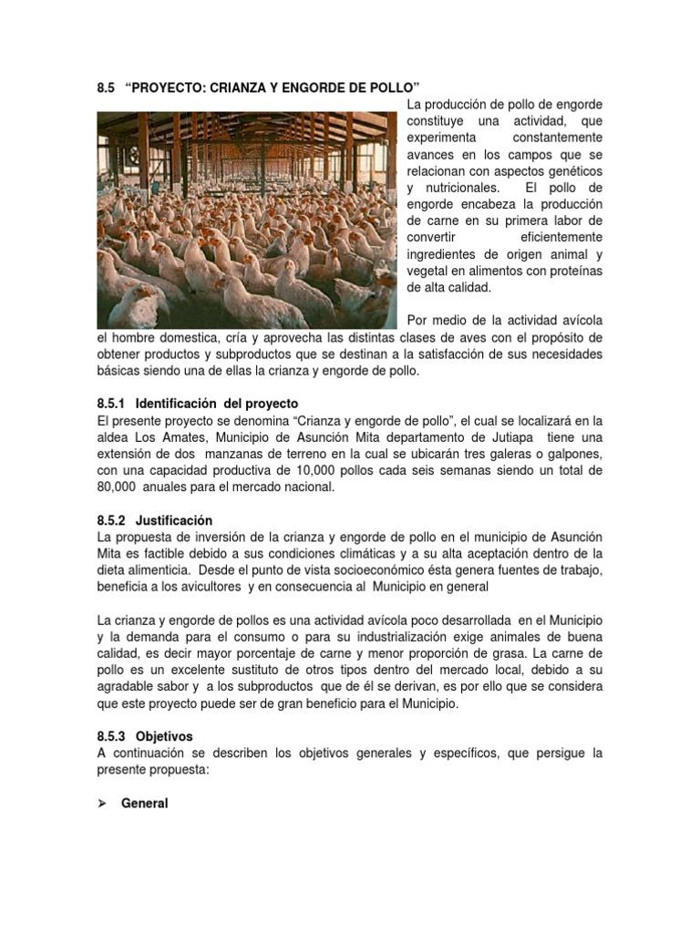 Pollos de engorde for Proyecto de crianza de truchas pdf
