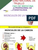 musculos de la mimica-091123222532-phpapp02