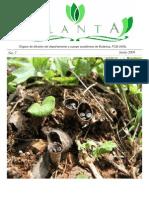 planta_no7