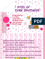 The Sites of Enzyme Synthesis