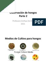 5_Observacion de hongos_2