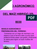 6. Cultivo de Maiz