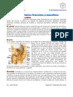 Aspectos_anatomicos_femeninos_y_maculinoszz